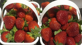 Blog-Photo-Strawberries-2-3-16
